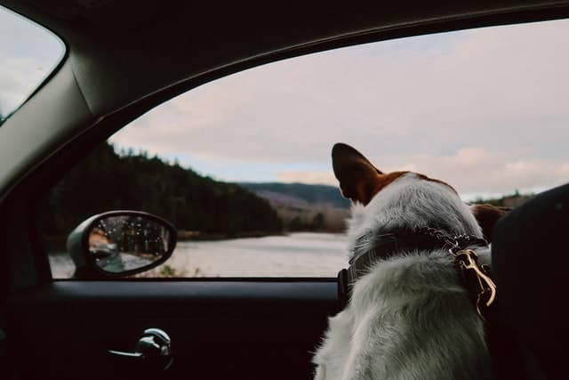 11 Ways To Remove Dog Hair From Car Headliner
