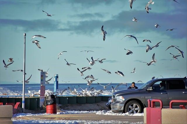 How Does Bird Poop Damage Car Paint